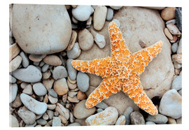 Acrylglas print  Starfish on a beach - Tony Craddock