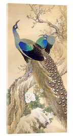 Acrylglas print  Two peacocks in spring - Imao Keinen