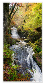 Premium poster Lynmouth river woodland