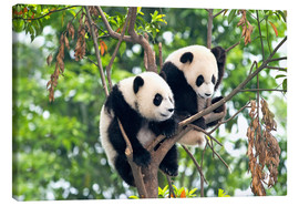 Canvas print  Young Pandas in a tree - Tony Camacho