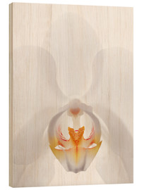 Hout print  in the throat of the Orchid - GAVIN KINGCOME