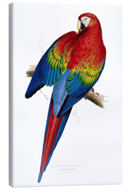 Canvas print  Red & Yellow Macaw - Edward Lear