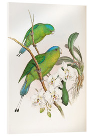 Acrylglas print  Philippine Racket tailed Parrot - John Gould
