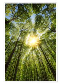 Premium poster Sunbeams in the forest