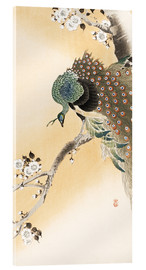 Acrylglas print  A peacock in a cherry tree crown - Ohara Koson
