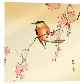 Acrylglas print  Red Bird and Cherry Blossoms - Ohara Koson