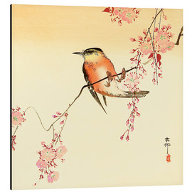 Aluminium print  Red Bird and Cherry Blossoms - Ohara Koson