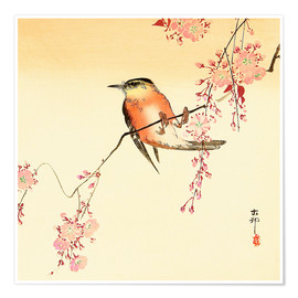 Premium poster  Red Bird and Cherry Blossoms - Ohara Koson