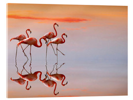 Acrylglas print  Flamingos in the mirror - Anna Cseresnjes