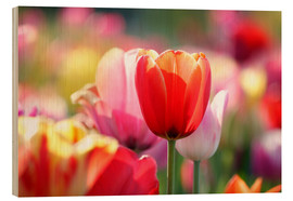 Hout print  Beautiful colorful Tulips - Lichtspielart