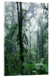 Acrylglas print  Costa Rica - Rainforest - Matteo Colombo