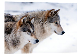 Acrylglas print  Two Wolves in the snow - Louise Murray