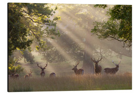 Aluminium print  Deer in morning mist - Stuart Black