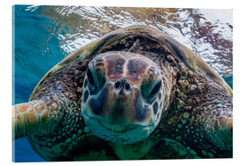Acrylglas print  Green sea turtle - Michael Nolan