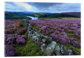 Acrylglas print  Heather covered Bamford Moor and dry stone wall - Eleanor Scriven