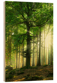 Hout print  Sunlight in forest - Nadine Conrad