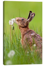 Canvas print  Kiss the dandelion - Moqui, Daniela Beyer