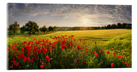 Acrylglas print  Poppy Field - Michael Rucker