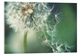 Acrylglas print  Dandelion in the wind - Julia Delgado