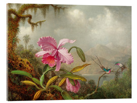 Acrylglas print  Cattleya Orchid and Three Hummingbirds - Martin Johnson Heade