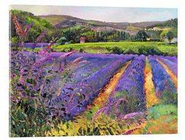Acrylglas print  Lavender field - Timothy Easton