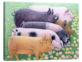 Canvas print  Pigs - Pat Scott