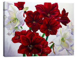 Canvas print  Rood en wit Amaryllis, 2008 - Christopher Ryland