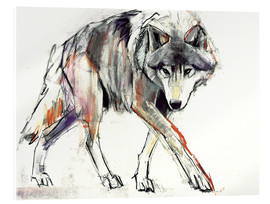 Acrylglas print  Wolf in search - Mark Adlington