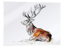 Acrylglas print  Lying Stag - Mark Adlington