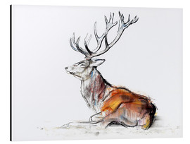Aluminium print  Lying Stag - Mark Adlington