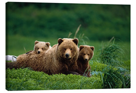 Canvas print  Grizzly bear with cubs - Jo Overholt