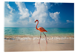 Acrylglas print  Flamingo on the beach - Ian Cuming
