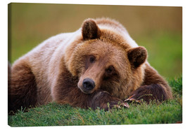 Canvas print  Lying brown bear - Doug Lindstrand