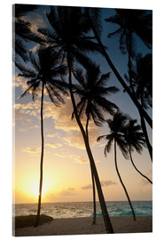 Acrylglas print  Palm trees at dawn - Ian Cuming