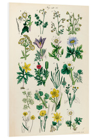 PVC print  Wildflowers - Sowerby Collection