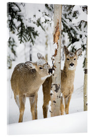 Acrylglas print  Deers in a winter forest - Michael Interisano
