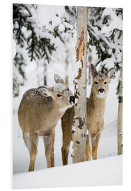 PVC print  Deers in a winter forest - Michael Interisano