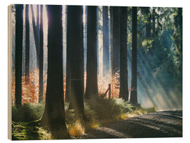 Hout print  Morning Light in the Forrest - Martina Cross