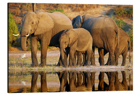 Aluminium print  Elephants at a river, Africa wildlife - wiw