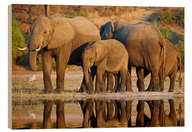 Hout print  Elephants at a river, Africa wildlife - wiw