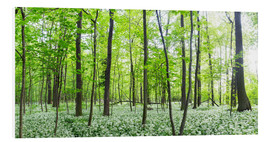 PVC print  A forest in springtime with wild garlic - Benjamin Butschell
