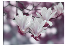Canvas print  Magnolia Purple - Atteloi