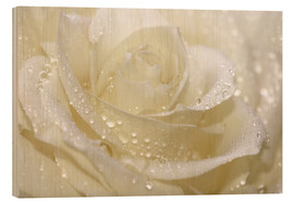 Hout print  White rose with drops - Atteloi