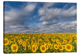 Canvas print  Sea of Sunflowers - Achim Thomae
