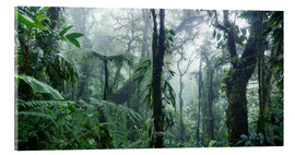 Acrylglas print  Misty Rainforest, Costa Rica - Matteo Colombo