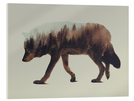 Acrylglas print  Norwegian Woods The Wolf - Andreas Lie