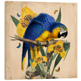 Hout print  Oh My Parrot IX - Mandy Reinmuth