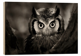 Hout print  White-faced Owl perched in a tree - Johan Swanepoel