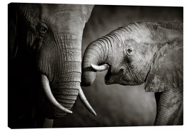 Canvas print  Baby elephant interacting with Mother - Johan Swanepoel