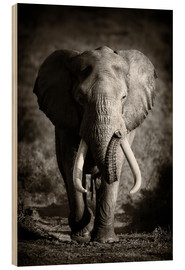 Hout print  Elephant with huge tusks approaching - Johan Swanepoel